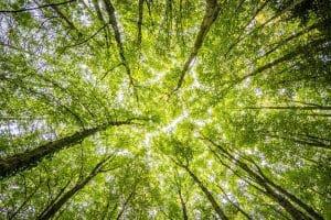 upwards photo of trees